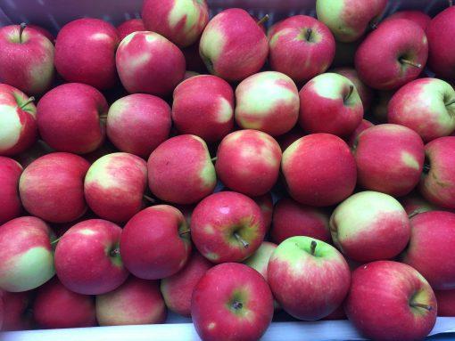 Elstar Apfel-1
